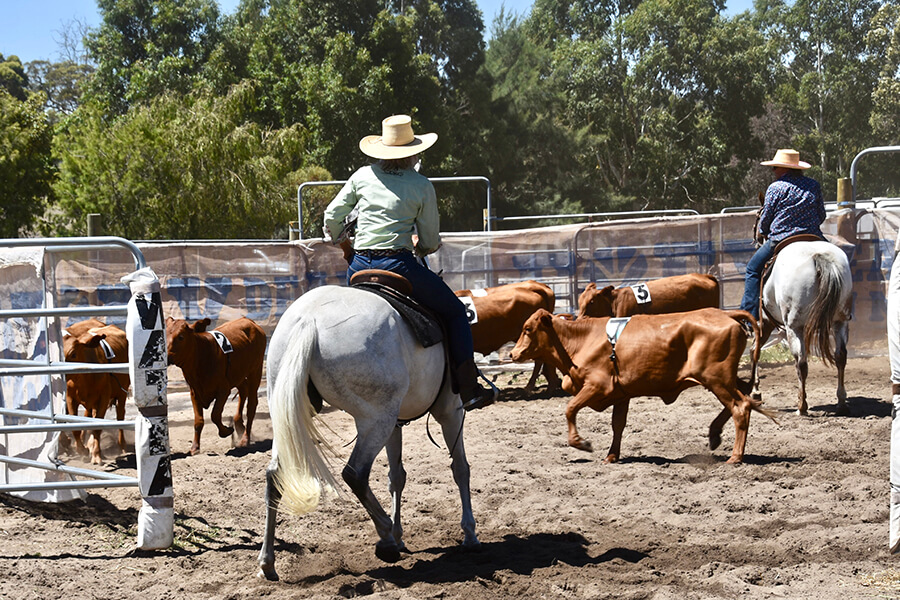 Join WATPA on their many club days where you can practice Ranch Sorting.