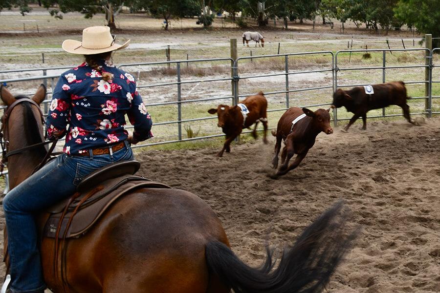 Ranch Sorting at WATPA event.