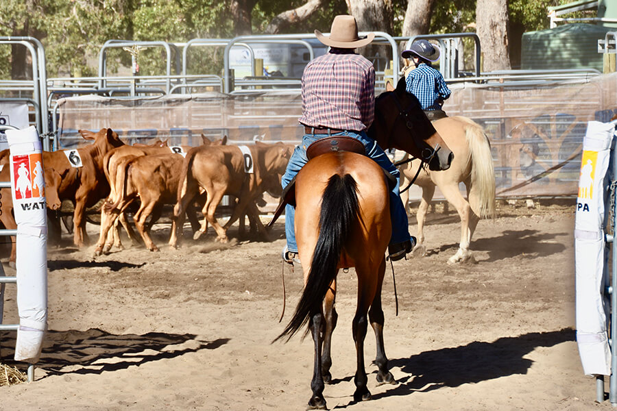 Rounding up cattle has never been so much fun!