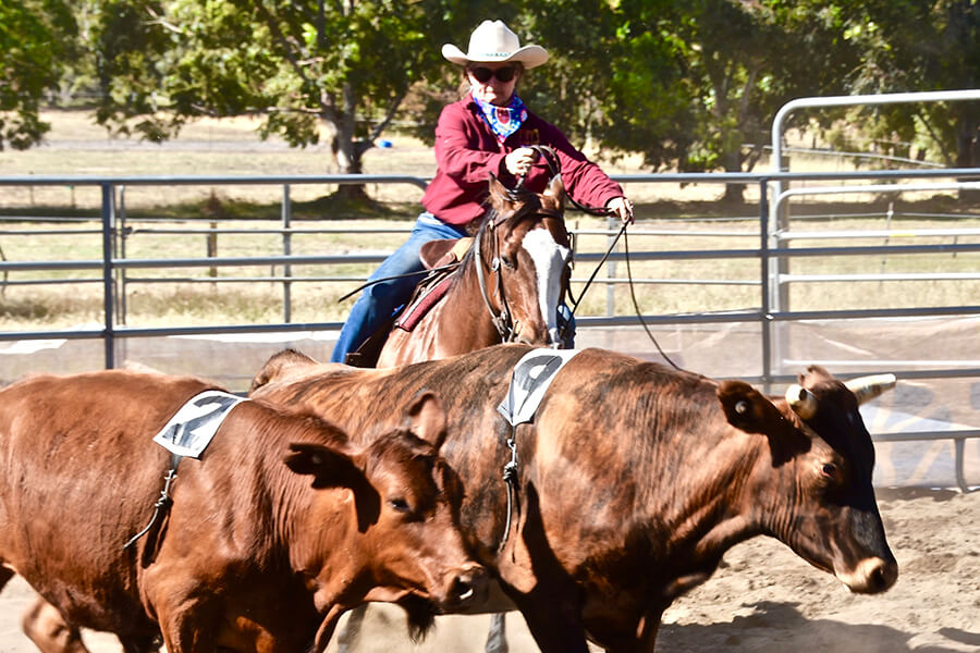Team Penning fun for all the family.